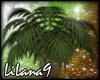 *LL* Tropical Plant enh