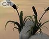 Riverside Cattails Plant