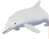 White Dolphin (Female)
