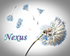 Dandelion Animated