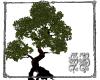 SB Ole Root Tree