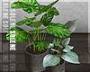 s | Sven Plants