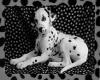 SG Dalmatian Pic Frame