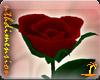 Valentine gift rose