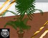 }T{ Palm Plant