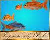 I~Animated Fish