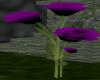 Purple/black Rose