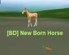 [BD] New Born Horse