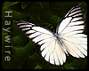 :Prioneris Butterfly