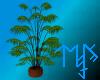 )L( wood pot plant