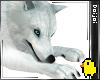 WHITE WOLF [Animal FN]