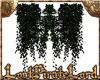[LPL] Dark Vine 001