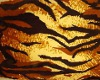 FD5 tiger skin back drop