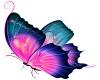 Vibrancy Butterfly 1