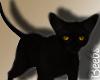 ♡ Salem Black Cat