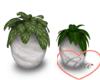 Plants Pearl