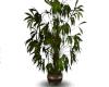 Nice Full Plant