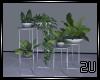 2u Indoor plants set