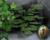 .-| Secret Garden Tree