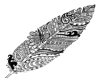 Ornate Feather