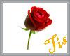 (Tis) Falling Roses
