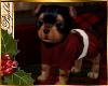 I~Yorkie Boy*Santa