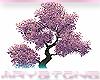 [A] Cherry tree
