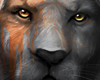 Enimatic Lion - DN.Fis