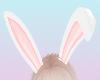 bunbun ears ❤