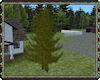 ⚡ Spruce Tree