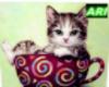 cat in a cup5
