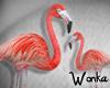 W° Flamingo e