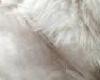 white cat kini