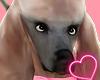 Poddle Dog [Podium] ♦