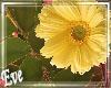 ♣ Yellow Flower Bush