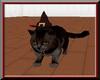 ~L~Wizard Cat