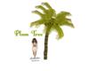 Plam Tree