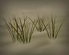 3D Grass Shoots