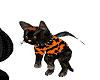 halloween witch cat pet