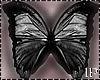 Butterflies Black Flying