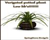 Varigated Plant LOW KB'S