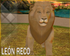 c Lion Animated