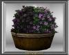 Purple Flowering Planter