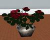 exquisite roses in vase
