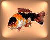 Koi fish Tri Colored