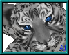 (A) Baby Snow Leopard