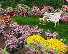 Rose Garden animated