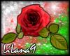 *LL* Red Rose enhancer