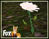 Dancing White Flower