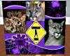 Purple Cougar Radio